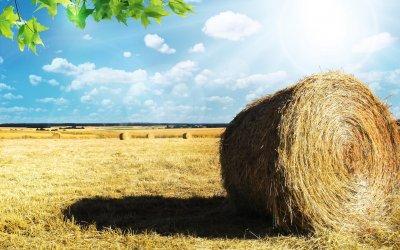 O setor Agroalimentar na França