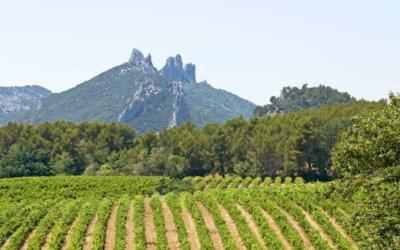 """Sweden is a natural destination for Gigondas wines"""